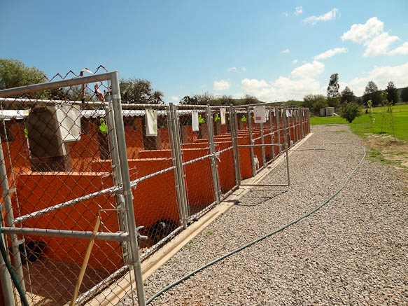 dog shelter in san luis potosi
