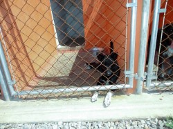 dog in cage at shelter in san luis potosi