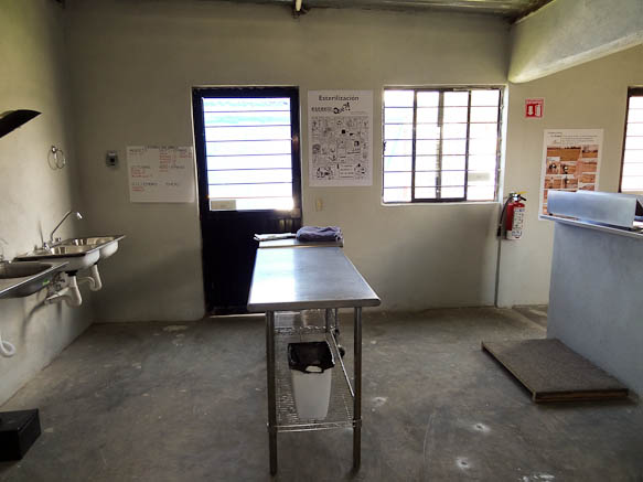 sterilization clinic at dog shelter in san luis potosi