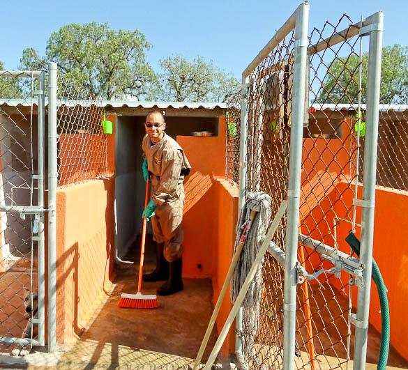me working at el perro abandonado dog shelter in san luis potosi