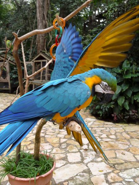 Beautiful Birds In Macaw Mountain Bird Park Honduras