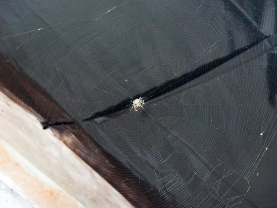 A Spider And Its Web Above My Bed In El Salvador