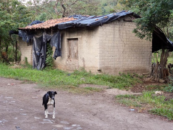 A Dog Guarding A House