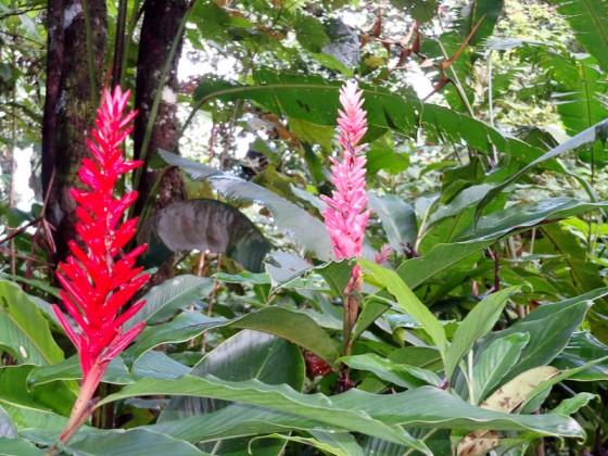 Beautiful Plants In Costa Rica