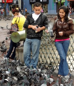 Feeding Pigeons In Plaza de las Artes