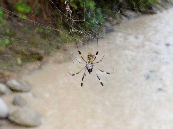 Spider On London Bridge