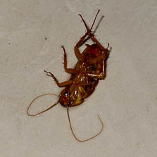 roach close up