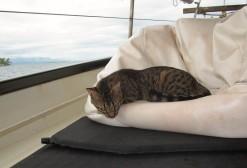 Gato The Resident Cat