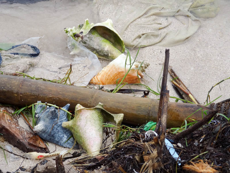Amazing Seashells In The Garbage