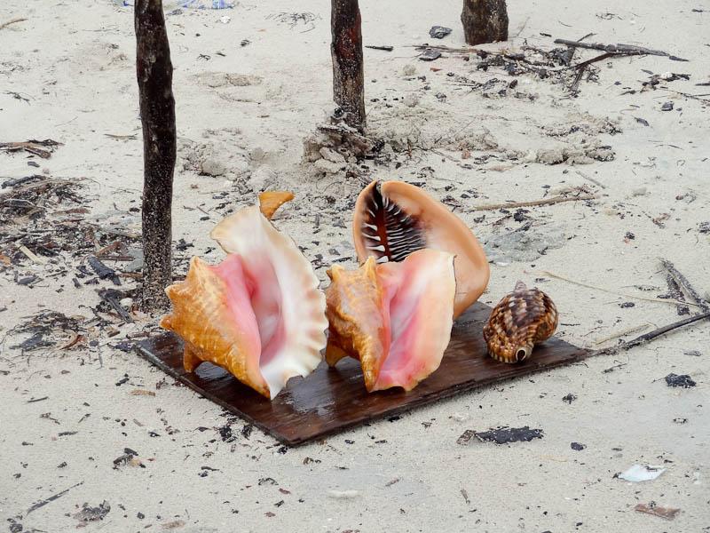Artistic Seashells