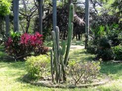 Bolivar Botanical Garden