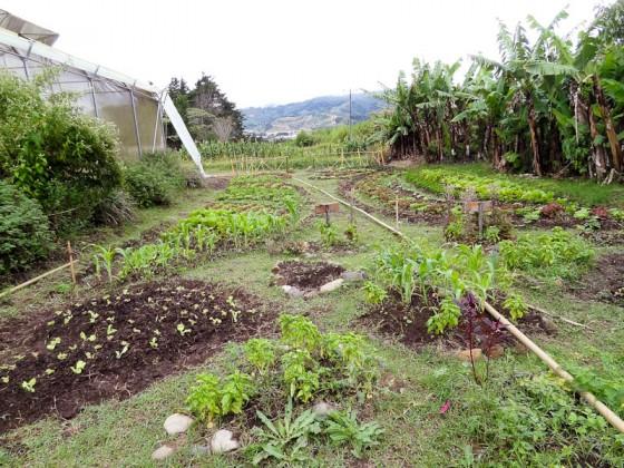 TEC Garden
