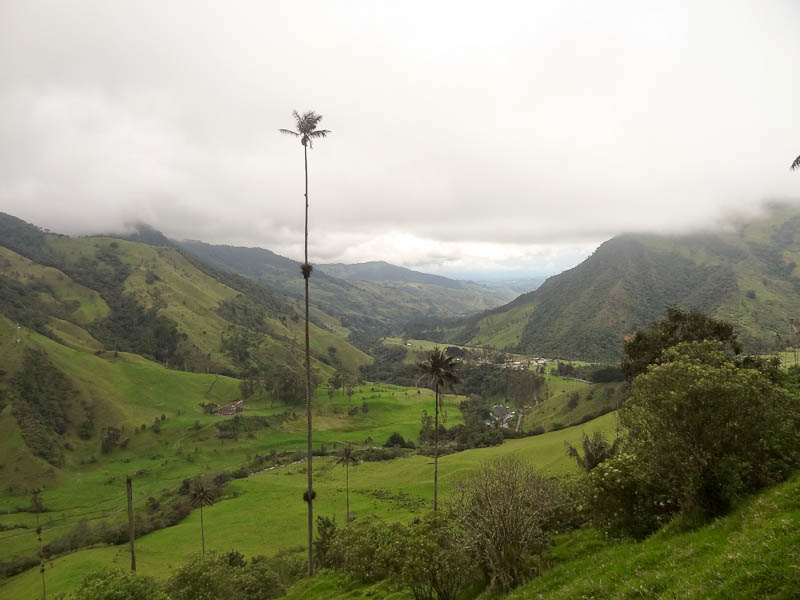 Cocora Valley - Taken Feb 8, 2012 - Salento, Colombia