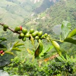 An Amazing Day On A Colombian Coffee Farm