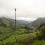 Cocora Valley - Obscene Beauty, Humming Birds, And Palm Trees That Touch The Clouds