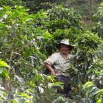 Photo Friday - The Real Juan Valdez And His Coffee Plants - Neira, Coffee Zone, Colom...