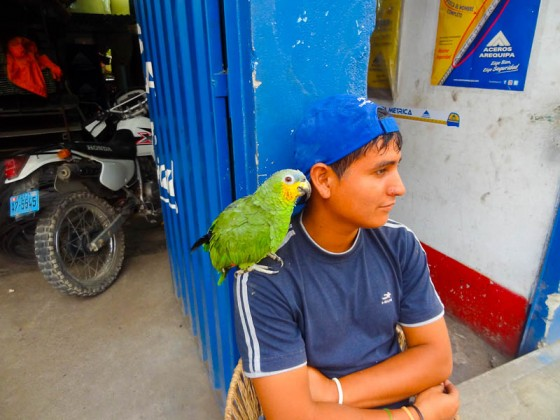 Man And Parrot - Taken 28-Mar-2012 - Casma, Peru