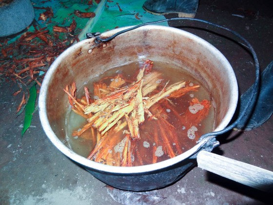 Ayahuasca In The Pot