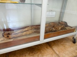 Mummy In The Museum