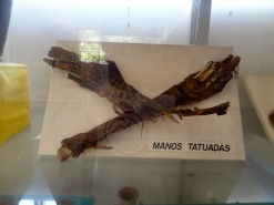 Tattooed Mummified Hands In The Museum
