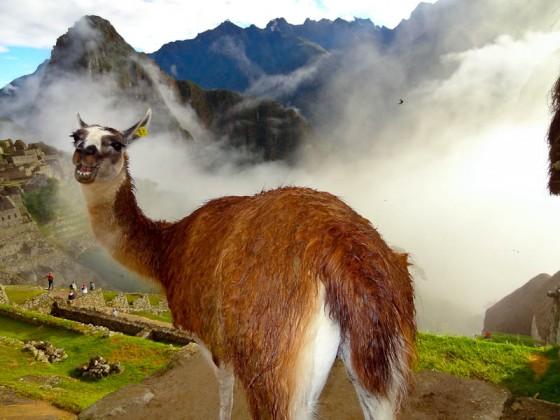 Are You Seeing What I'm Seeing? - Taken 2-May-2012 - Machu Pichu, Peru