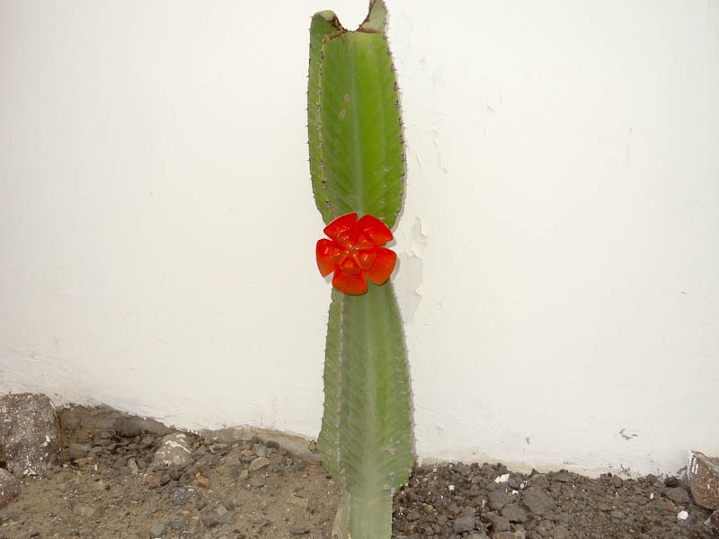 Desert Cactus And Flower