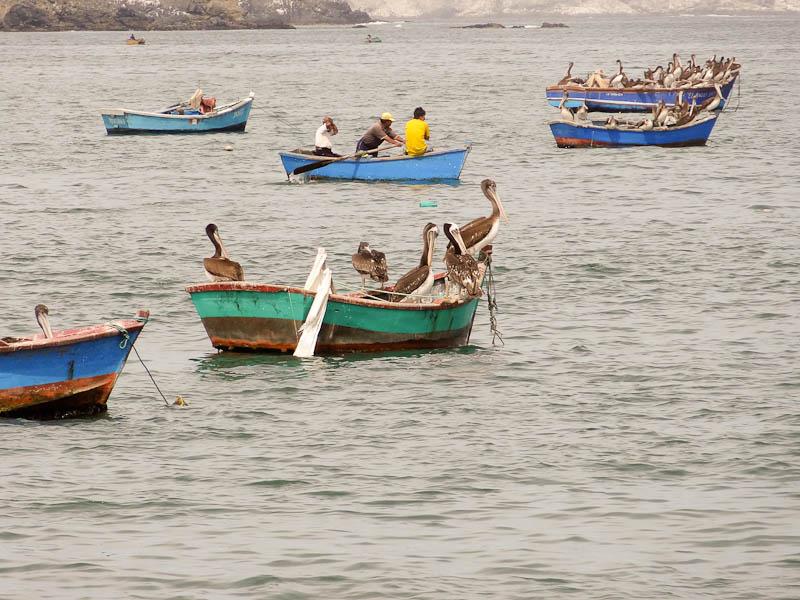 Fishermen And Seagulls