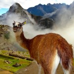 Photo Friday - &quot;Are You Seeing What I'm Seeing?&quot; - Machu Pichu, Peru