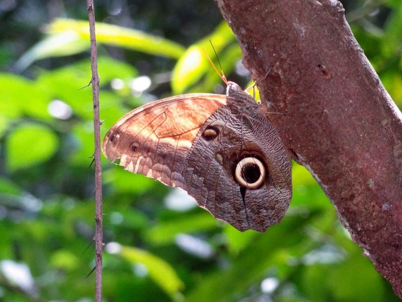 Butterfly In Tayrona National Park In Colombia