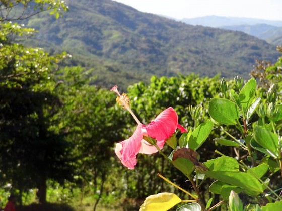 Flower With A View - Chichica, Panama