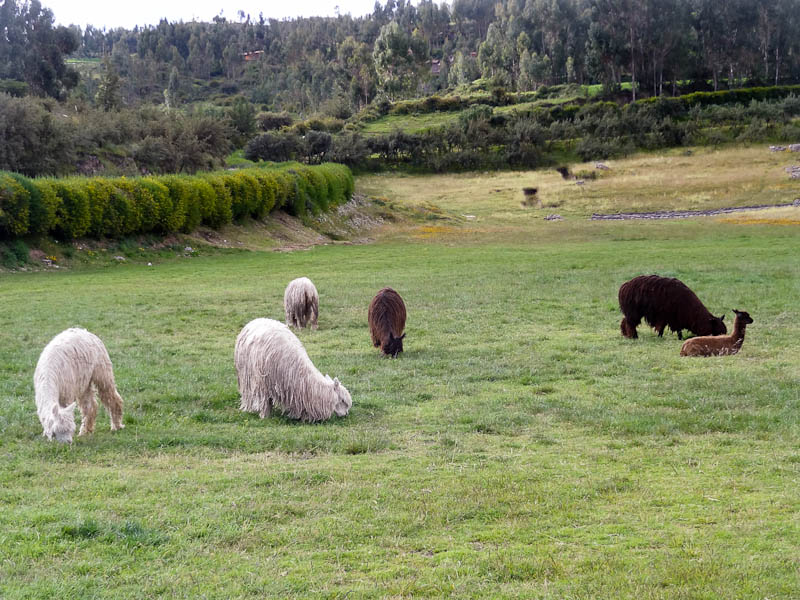 Grazing Animals