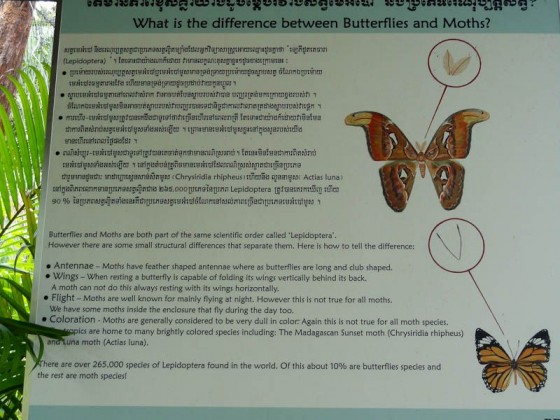 Moth Vs. Butterfly