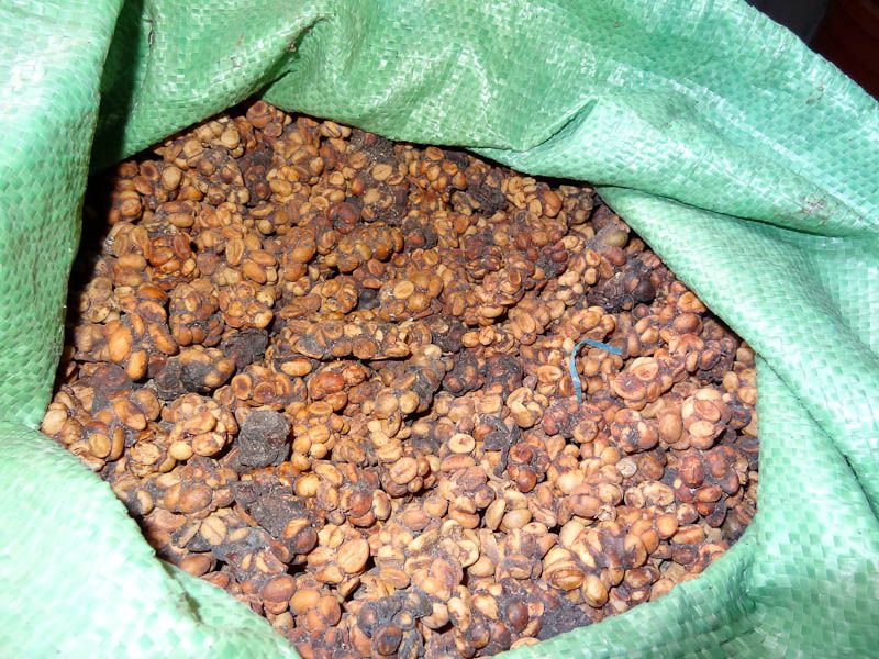 Weasel Poop Coffee Beans