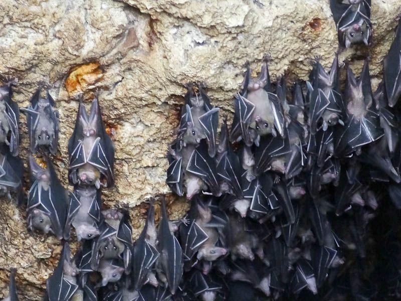 Bats (2)
