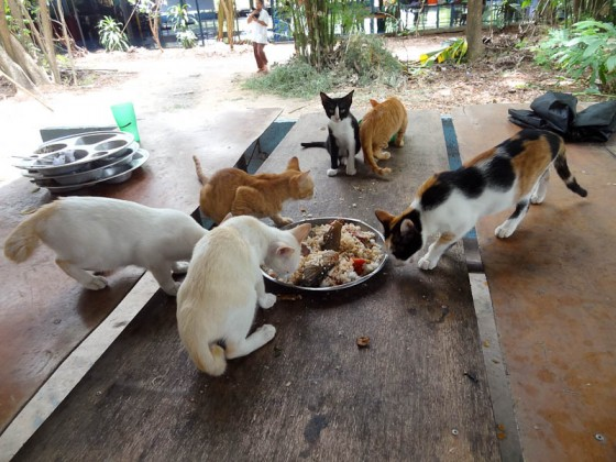 Cats Eating Leftovers