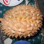 A Tribute To Durian - King Of All Fruits