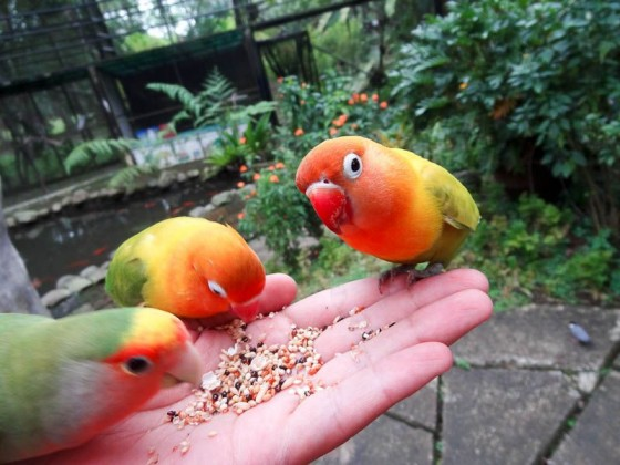 birds eating out of my hand