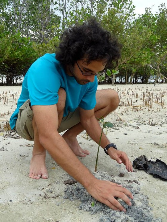 planting a mangrove tree in the philippines