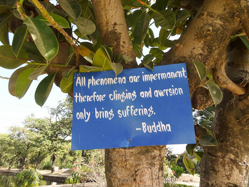 Buddha's Teachings