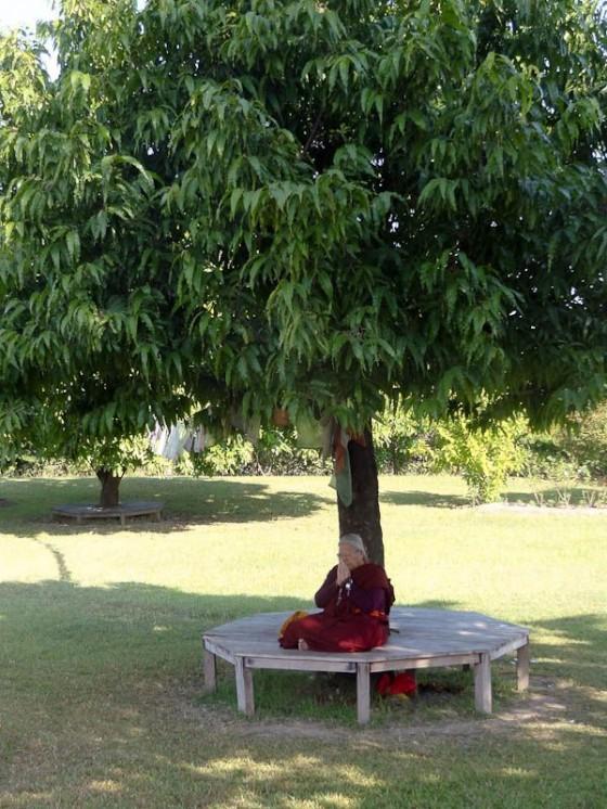 Meditating Under A Tree