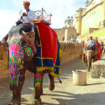 Photo Friday - Elegant Elephant Transportation - Jaipur, India