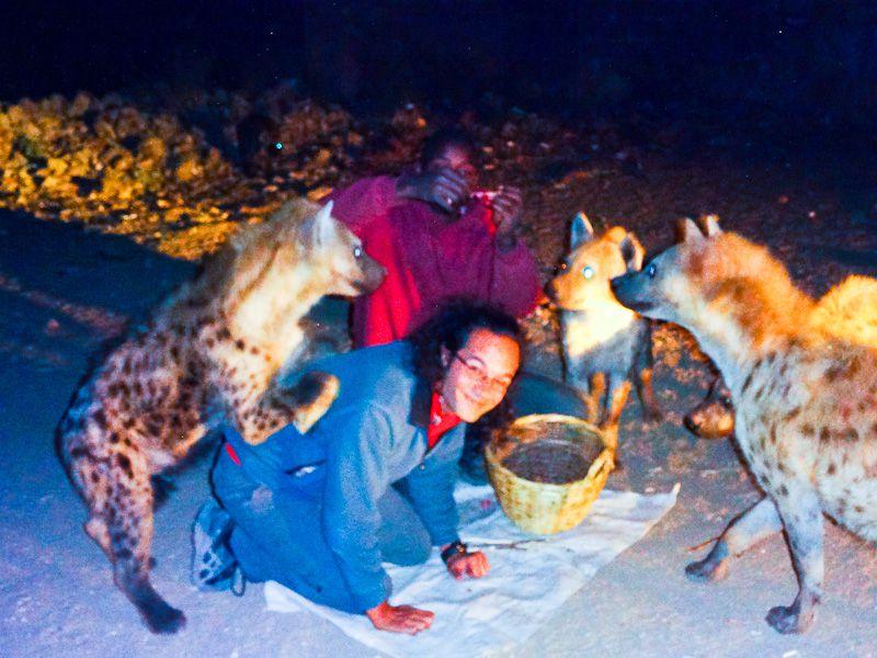 Feeding The Hyenas