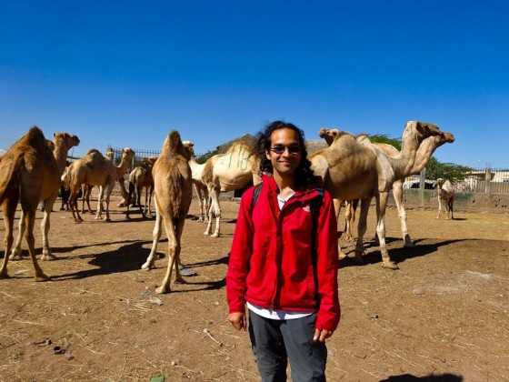 With The Camels