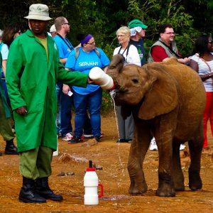 Nursing Baby Elephants Back To Health - Taken 10-Jan-2014 - Nairobi, Kenya