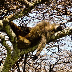 Hanging Out - Taken 17-Jan-2014 - Serengeti, Tanzania