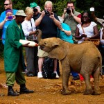 The David Sheldrick Elephant Orphanage