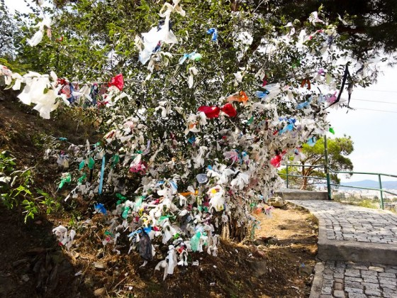 Tradition Is Tying Plastic To A Tree For Good Luck