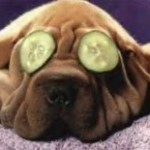 pamper yourself dog cucumbers on eyes