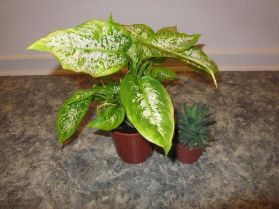 My Plant Now