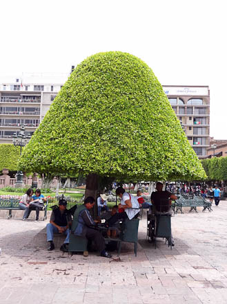 Mushroom Trees in Leon, Mexico
